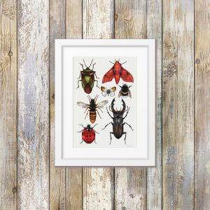 British Insects